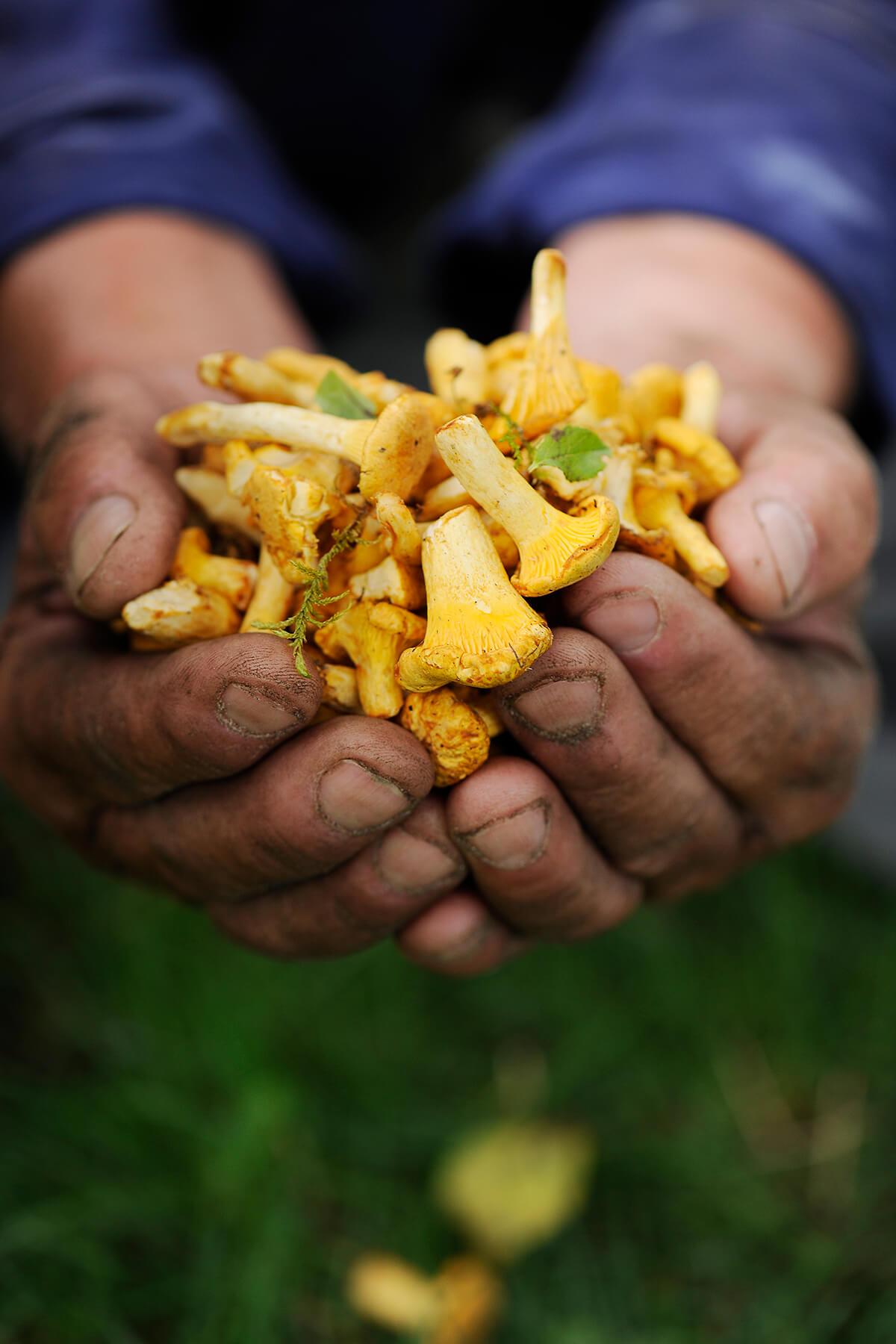 Hände mit Pilzen von Antje Plewinski Foodfotografie