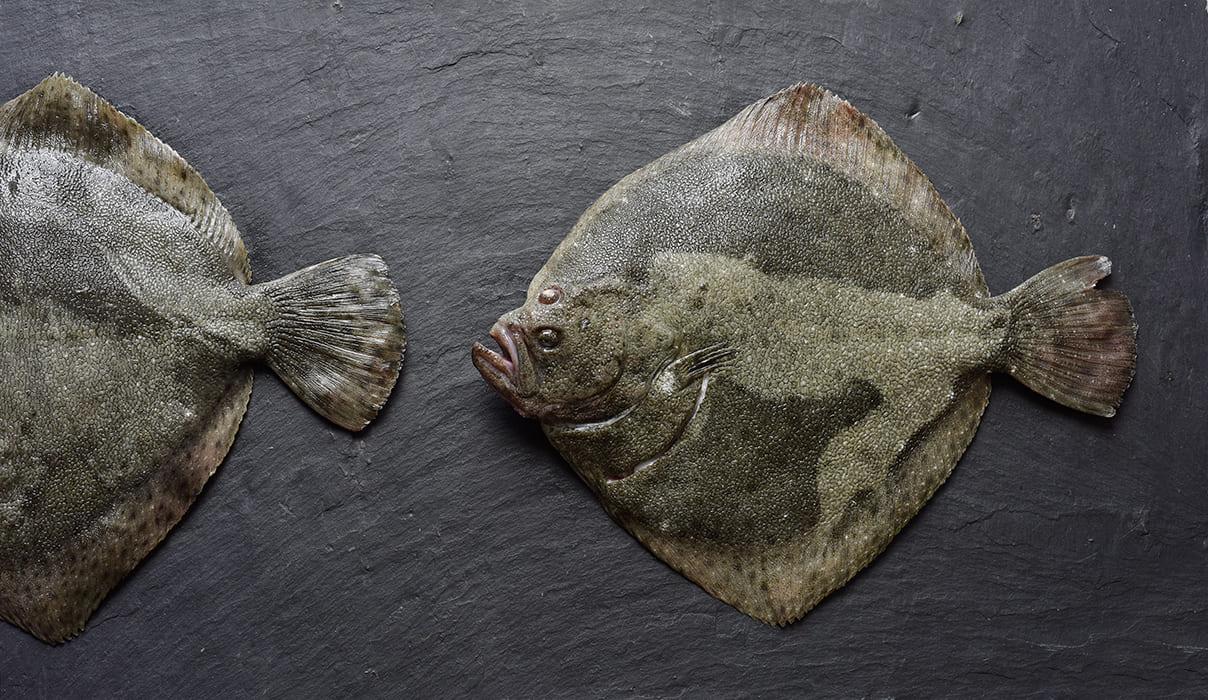 Antje Plewinski Foodfotografie Mehnert