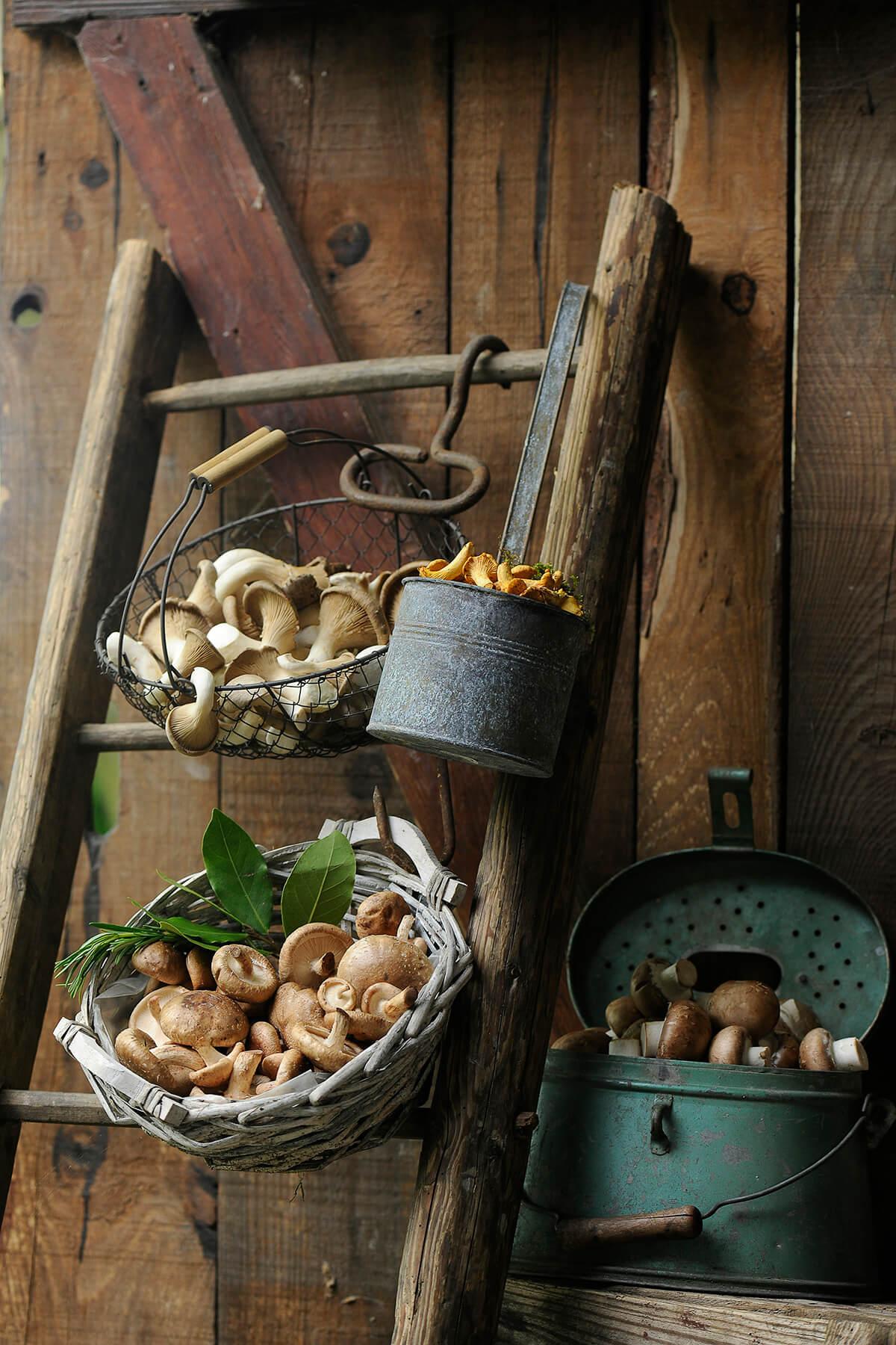 Pilze von Antje Plewinski Foodfotografie