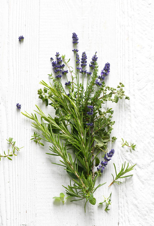 Kräuter Provence von Antje Plewinski Foodfotografie